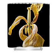 Dried Tulip Shower Curtain