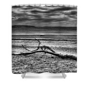 Driftwood Mono Shower Curtain