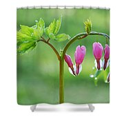Dripping With Heart Shower Curtain