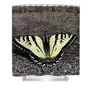 Driveway Butterfly Shower Curtain