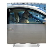 Driving Dog Shower Curtain