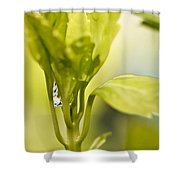 Drop Of Dew Shower Curtain
