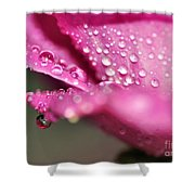 Droplet On Rose Petal Shower Curtain