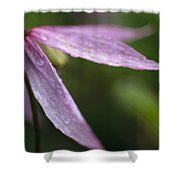 Droplets Of Dew On A Pink Wildflower Shower Curtain