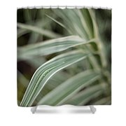 Drops Of Grass Symmetry Shower Curtain