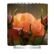 Drops Of Orange Shower Curtain