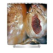 Drosophila Mutant With Bar Eyes Shower Curtain