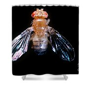 Drosophila With Dichaete Wings Shower Curtain