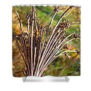 Dry Queen Anns Lace I Shower Curtain