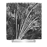 Dry Queen Anns Lace II Shower Curtain