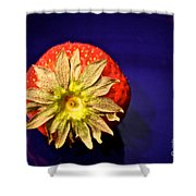 Dry Top Shower Curtain