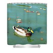 Duck 1 Shower Curtain