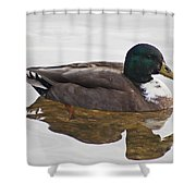 Duck 3 Shower Curtain