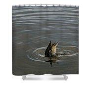 Duck Butt 1560 Shower Curtain