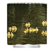 Duck Derby Ducks Shower Curtain
