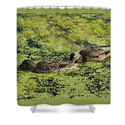 Duck Dinner Shower Curtain