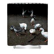 Duck Duck Goose Shower Curtain