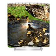 Duck Family Joy In Garden  Shower Curtain