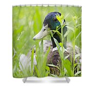 Duck In The Green Grass Shower Curtain