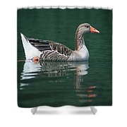 Duck On Water Shower Curtain