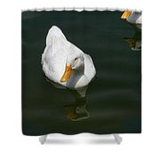 Duck Out - Stop Peking On Me Shower Curtain
