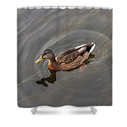 Duck Swimming In Clear Water St Shower Curtain