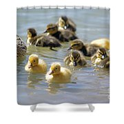 Ducklings 09 Shower Curtain