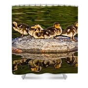 Ducklings Catch Some Rays Shower Curtain