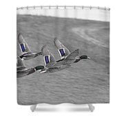Ducks In Flight V1 Shower Curtain