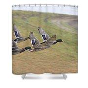Ducks In Flight V3 Shower Curtain