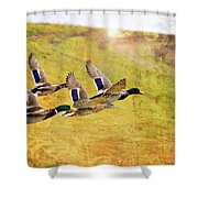 Ducks In Flight V4 Shower Curtain