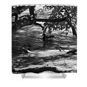 Ducks In The Shade In Black And White Shower Curtain