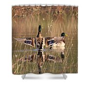 Ducks Of Douglas Shower Curtain