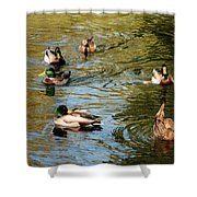 Ducks On The Water Shower Curtain
