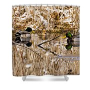 Ducks Reflect On The Days Events Shower Curtain