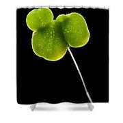 Duckweed Lemna Minor Shower Curtain