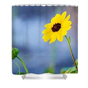 Dune Sunflower Shower Curtain