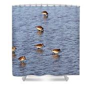 Dunlins Shower Curtain
