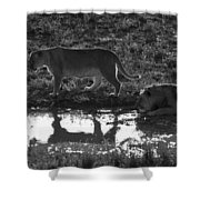 Dusk Reflections Shower Curtain