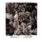 Dusty Miller  Shower Curtain