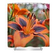Dutch Lily Shower Curtain