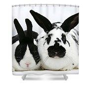 Dutch Rabbits Shower Curtain