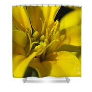Dwarf French Marigold In Disco Yellow Shower Curtain
