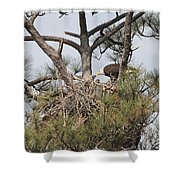 Eagle And Babies Shower Curtain