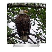 Eagle At Hog Bay Maine Shower Curtain