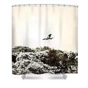Eagle Flying Above The Forest Shower Curtain