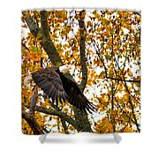 Eagle In Autumn Shower Curtain
