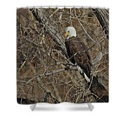 Eagle In Tree 3 Shower Curtain