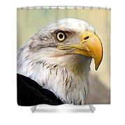 Eagle Portrait Shower Curtain