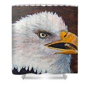 Eagle Study Shower Curtain